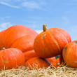Pumpkins in farm — Stock Photo
