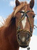 Hermoso caballo — Foto de Stock