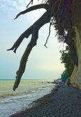 Baumwurzeln über Strand — Stock Photo