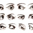 Human eye in various positions - Stock Photo