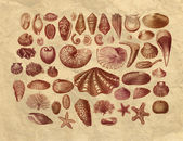 Exotic sea shells collection — Stock Photo