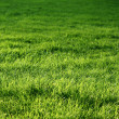 Foto Stock: Natural green grass