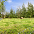 Large horse pasture with shed during spring. — Stock Photo