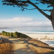 White sand beach and trail with tree in Carmel, CA — Stock Photo #11528116