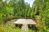 Pond in the forest with small pier. — Stock Photo