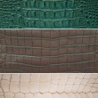 Freshwater crocodile belly skin texture background. - Foto Stock