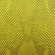 Freshwater Gold crocodile belly skin texture background. — Stock Photo #11538625