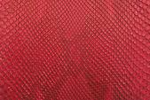 Crocodile red bone skin texture background. — Stock Photo