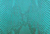 Blue Freshwater crocodile bone skin texture background. — Stock Photo