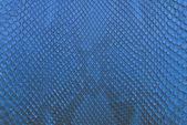 Blue python snake skin texture background — Stock Photo