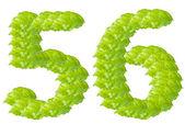 Carácter de alfabeto hoja verde número 5 y 6 — Foto de Stock