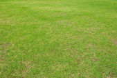 Green grass texture background. — Stock Photo