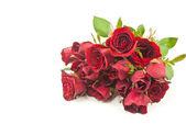 Rote rose isoliert auf der weißen. — Stockfoto