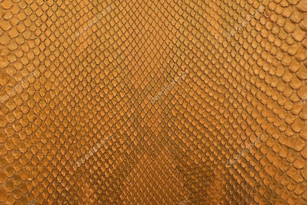 Gold python snake skin texture background — Stock Photo #11715972