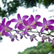Purple orchid in the park — Stock Photo