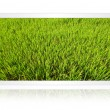 Royalty-Free Stock Photo: Paddy field in the tablet screen isolate on the white.