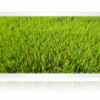 Paddy field in the tablet screen isolate on the white. — Stock Photo