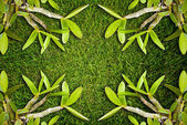 Orchid leaf on the grass field texture. — Stock Photo
