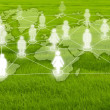 Stock Photo: Social Network on grass field.