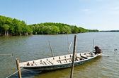Mangrovových lesů. — Stock fotografie