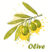 Vektor-olive — Stockvektor