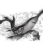 Knifetooth Sawfish or Anoxypristis cuspidata, vintage engraving — Stock Vector #10995556