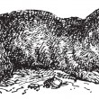 Spalax or mole rat, vintage engraving. - Stockvektor