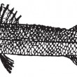 Barracuda or Sphyraena sp., vintage engraving — Stok Vektör