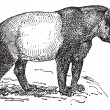 Incisione d'epoca tapiro — Vettoriale Stock