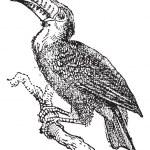 Toucan, vintage engraving. — Stock Vector