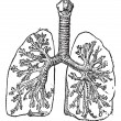 Royalty-Free Stock Imagen vectorial: Trachea or Windpipe, vintage engraving.