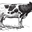 Dutch cattle breed, vintage engraving. — 图库矢量图片