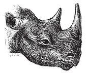Black Rhinoceros or hook-lipped rhinoceros (Diceros bicornis), v — Stock Vector