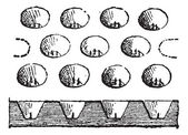 Egg Tray, vintage engraving — Stock Vector