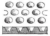 Egg Tray, vintage engraving — Stock Vector