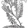 Tufted Vetch or Vicia cracca, vintage engraving — Stockvektor