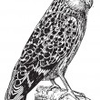 Bubo ketupu or Buffy fish owl, vintage engraving. -  