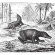Vetorial Stock : Labyrinthodon or Labyrinthodontia, vintage engraving.