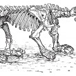 Megatheriid Ground Sloth or Megatherium sp., vintage engraving — Stockvektor