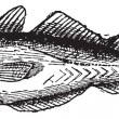 Whiting or Merlangius merlangus, vintage engraving — ベクター素材ストック