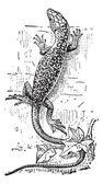 Lizard, vintage engraving — Stock Vector
