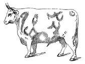 Beef Cuts, vintage engraving — Stock Vector
