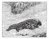 Thorny Devil or Moloch horridus, vintage engraving — Stock Vector