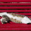 Cat twisted, stretching and sleeping — Stock Photo