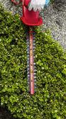 отделка верхней части живой изгороди с хеджер инструмент — Стоковое фото