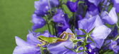 Zielona żaba rozciąga się na kwiaty — Zdjęcie stockowe