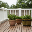 Home Patio Garden — Stock Photo #11899336