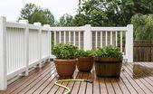 Watering Garden Plants on Patio — Stock Photo