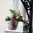 Hanging pot with flowers — Stock Photo