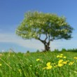 Stock Photo: Alone tree